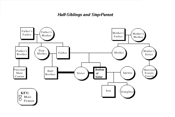 Putting those half siblings on a family tree for Family tree templates with siblings