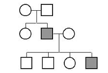 Family Pedigree