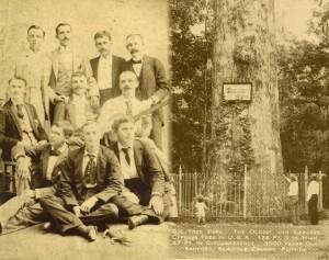 businessmen-tree