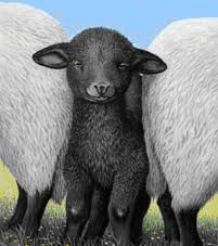 dark-sheep