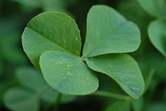 52 Ancestors in 52 Weeks - Luck of the Irish.  Find more genealogy blogs at FamilyTree.com.