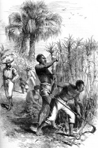Vintage engraving of slaves working sugar on a plantation.