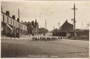 links-Sheep on Heywood Old Road
