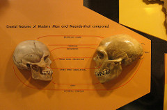 Skeletal Remains of Human Neanderthal Hybrid Found  Find more genealogy blogs at FamilyTree.com