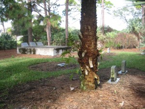 grave-Ashley