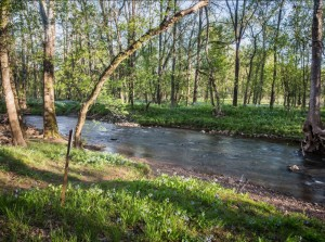 Photos-Sudley springs-now