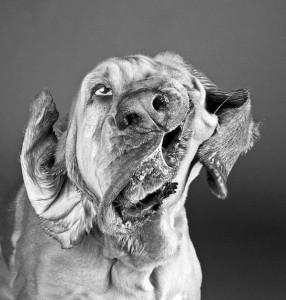terms-dog-shaking