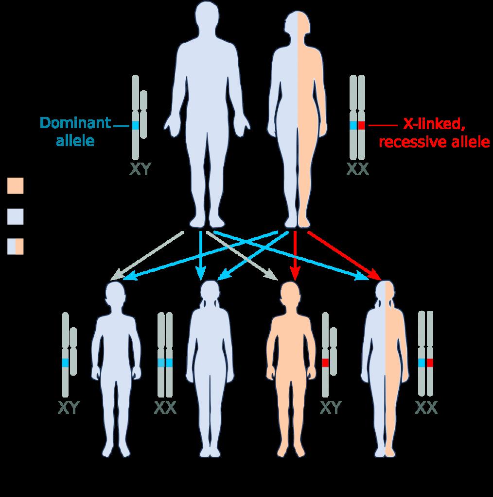Genetics Sex 111