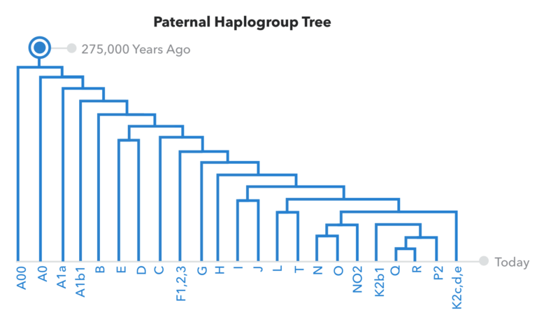 23andme improved their paternal haplogroup report familytree com